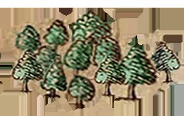 Bosco dell'esilio